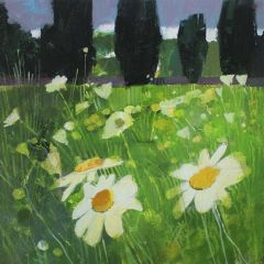 Daisy Field by Julian Sutherland-Beatson